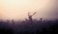 wpid-deer-hipster-mist-photography-favim.com-685281.jpg